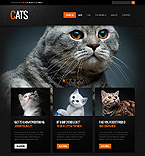 Website design #39922